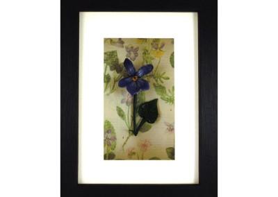 Wild flowers box frame – Violet