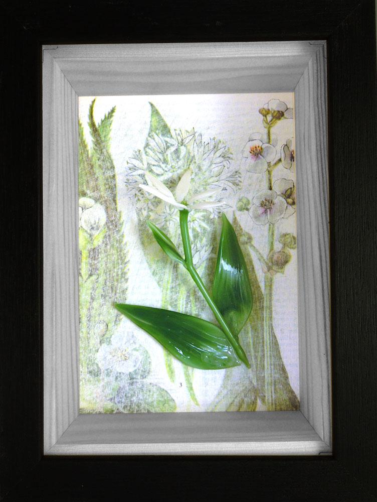 Wild flowers box frame – Wild garlic